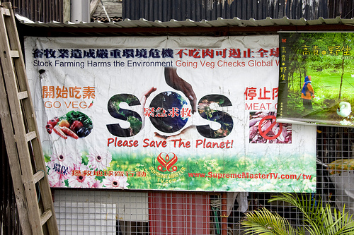 China Going Green Anne Roberts